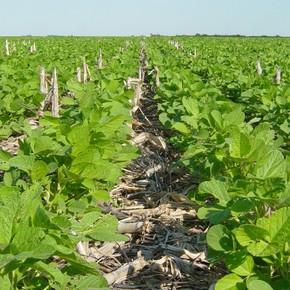 La tecnología marca la diferencia para acortar la brecha de rinde de soja