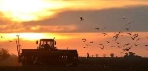 Cosecha de noticias | Lo más destacado de la agroindustria y las economías regionales.