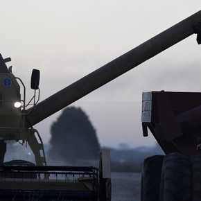 Por los menores rindes, la cosecha de soja cayó un 22% en Entre Ríos