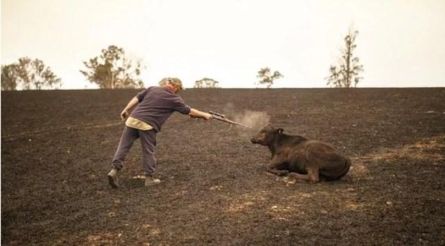 Devastador: ya murieron 480 millones de animales en los incendios en  Australia - Clarín
