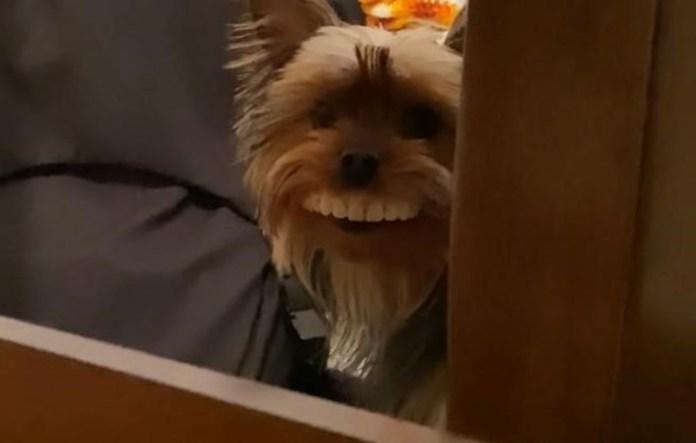 El perrito se robó los dientes falsos y se volvió viral.