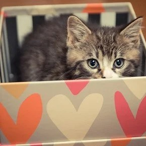 """The emotional notice of a woman who gives a gift """"chalet"""" cardboard for cat"""