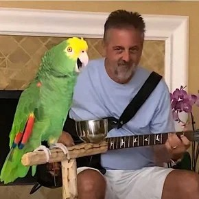Tico, the parrot that sweeps the networks singing songs from Guns N 'Roses, Led Zeppelin and The Beatles