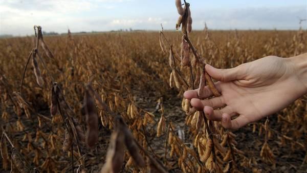 AdeS (Alimento de Soja) fue creada en el país en 1988, precisamente en la provincia de Tucumán.