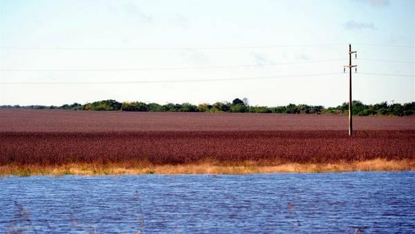 Habrá merma en los rindes de los cultivos que se siembran en la campaña siguiente y se desvalorizan los suelos por la salinización.