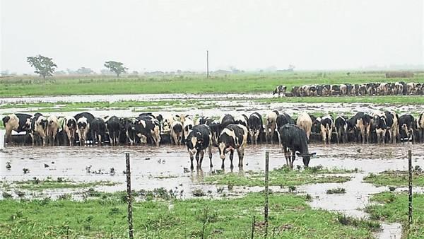 Los tambos de la cuenca lechera cordobesa son uno de los sectores más golpeados por las lluvias.