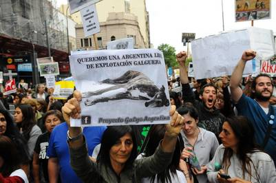 Manifestaciones a favor y en contra de la ley de prohibición de carreras de galgos. Fotos Diego Waldmann
