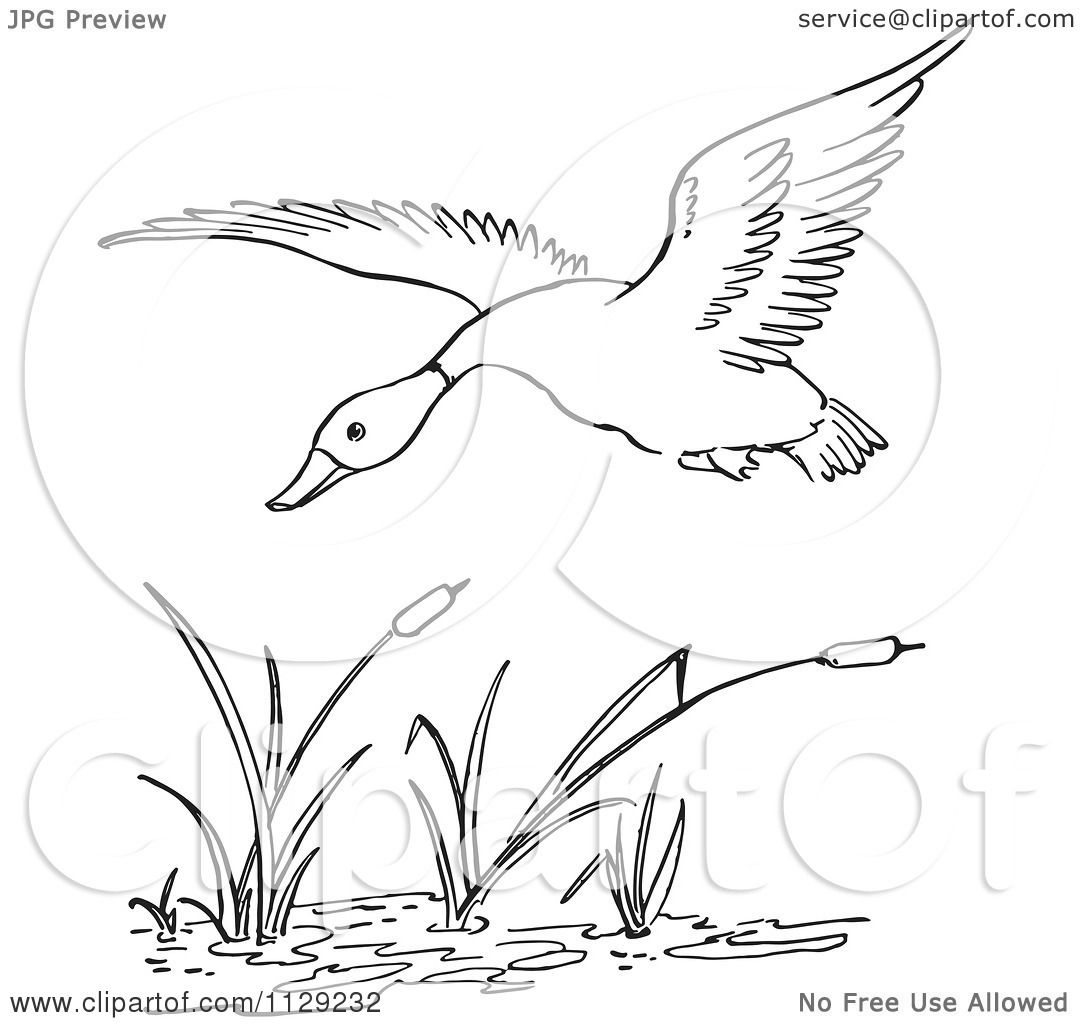 Cartoon Clipart Of An Outlined Duck Flying Over Cattails