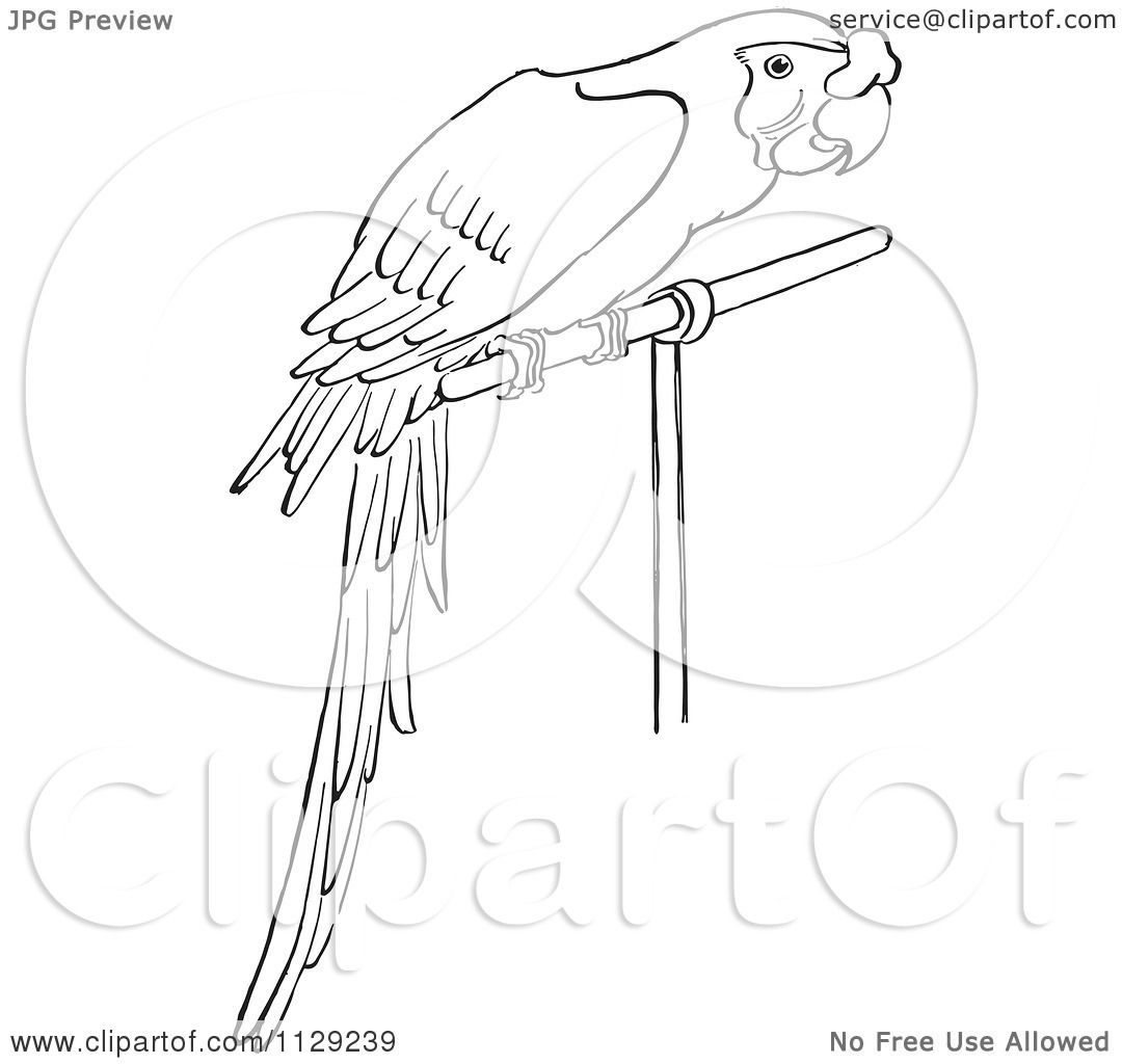 cartoon clipart of an outlined perched parrot black and white
