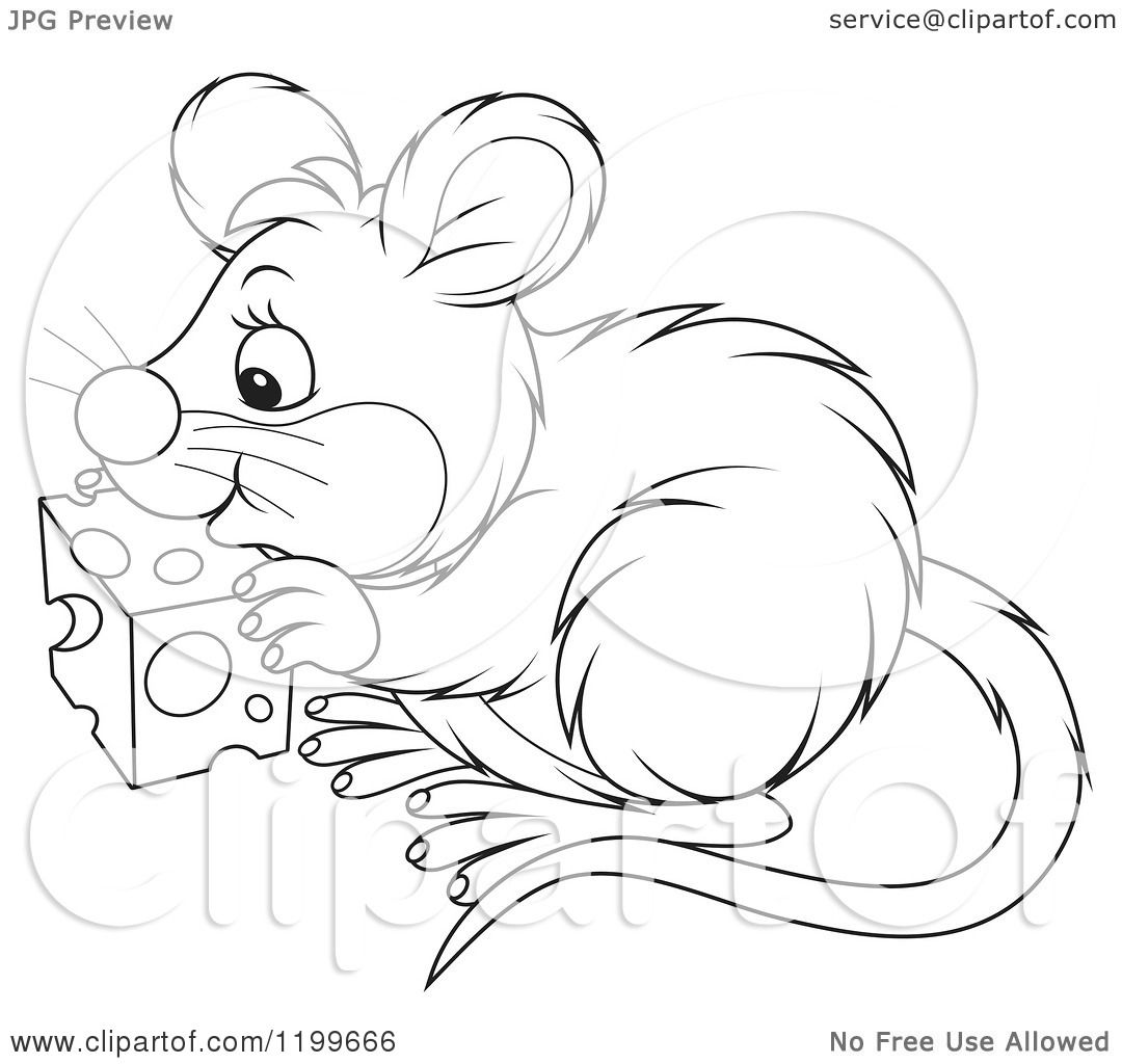 Cartoon Of A Black And White Cute Mouse Eating Cheese