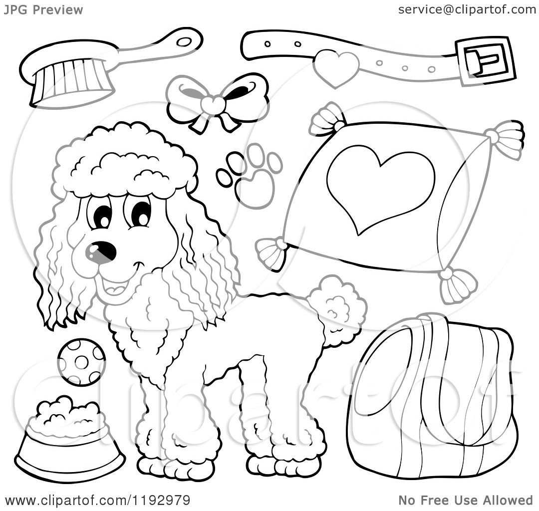 Cartoon Of A Black And White Happy Poodle Dog And Supplies