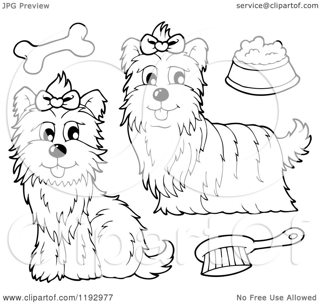 Cartoon Of Black And White Yorkie Dogs With A Brush Bone