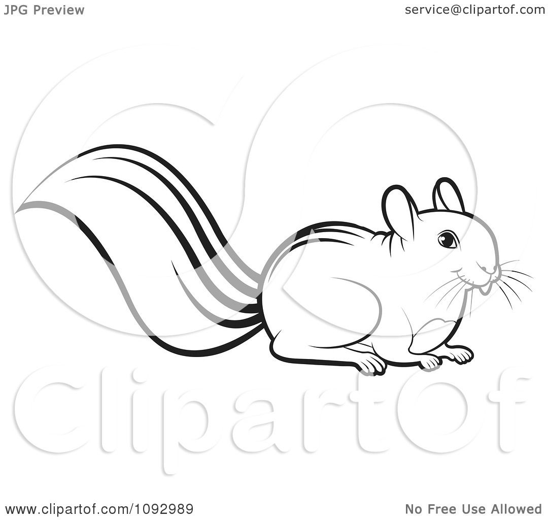Clipart Black And White Squirrel