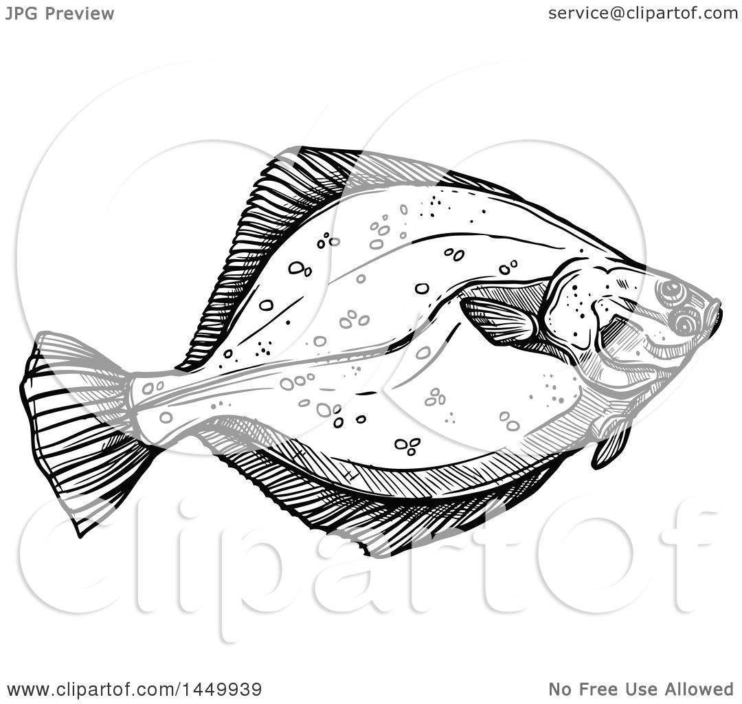 Clipart Graphic Of A Black And White Sketched Flounder