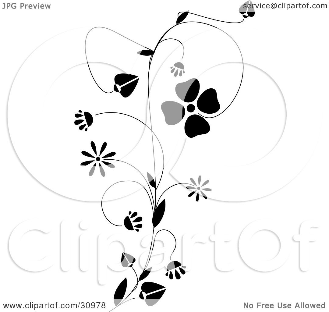 Clipart Illustration Of A Black Vine With Delicate