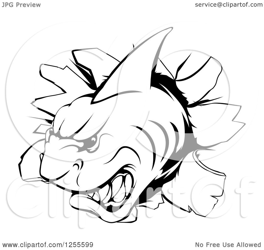 Clipart Of A Black And White Aggressive Shark Breaking