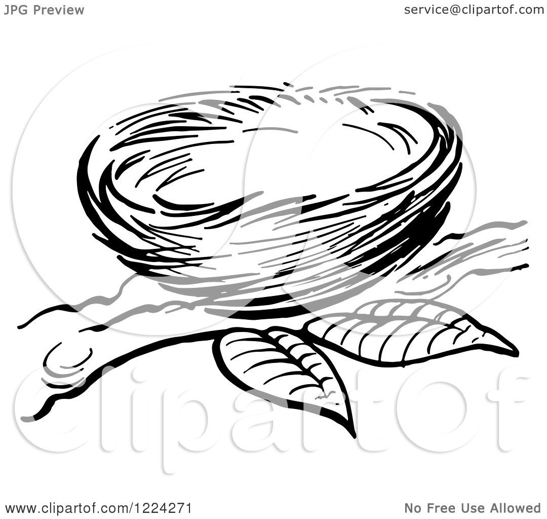 Clipart Of A Black And White Bird Nest On A Branch