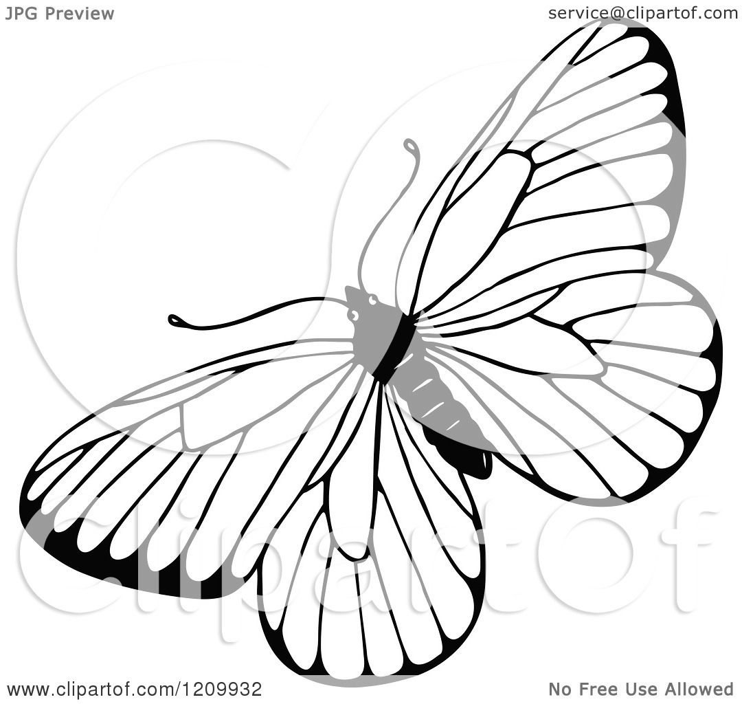 Clipart Of A Black And White Butterfly