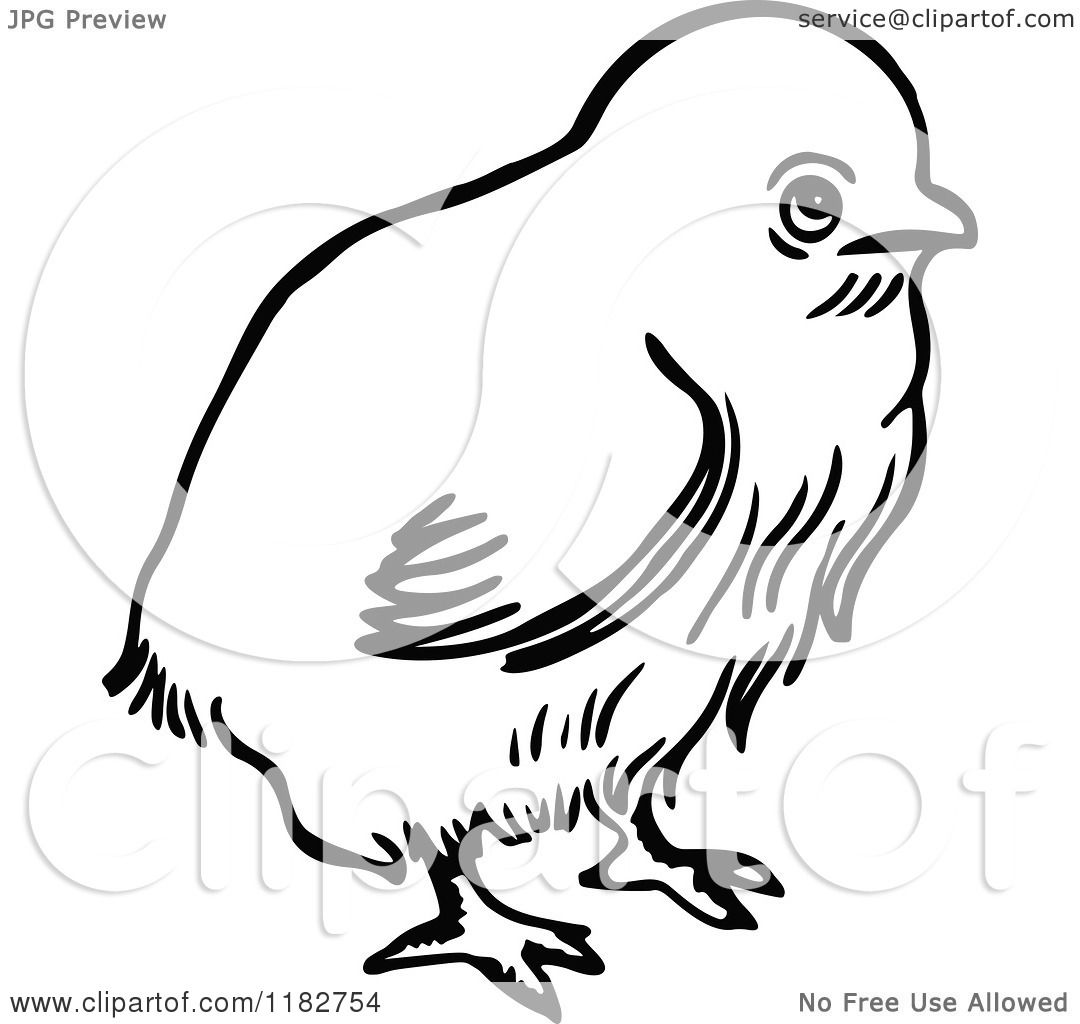 Clipart Of A Black And White Chick