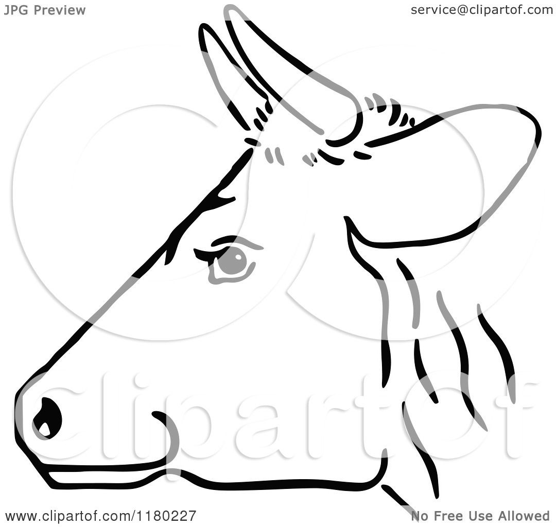 Clipart Of A Black And White Cow Head In Profile