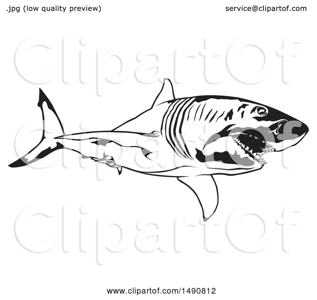 Clipart Of A Black And White Great White Shark