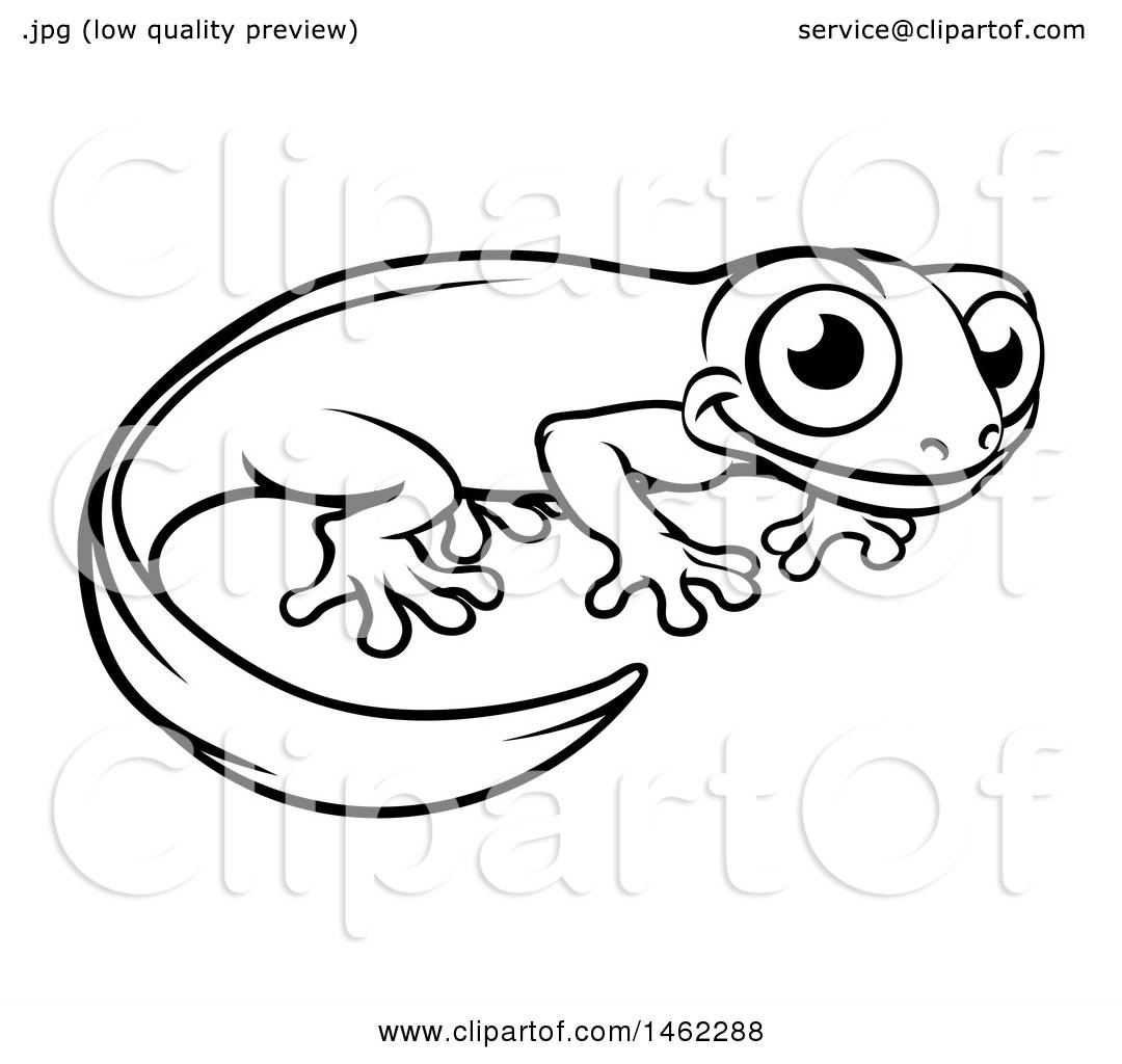 Clipart Of A Black And White Newt Or Salamander