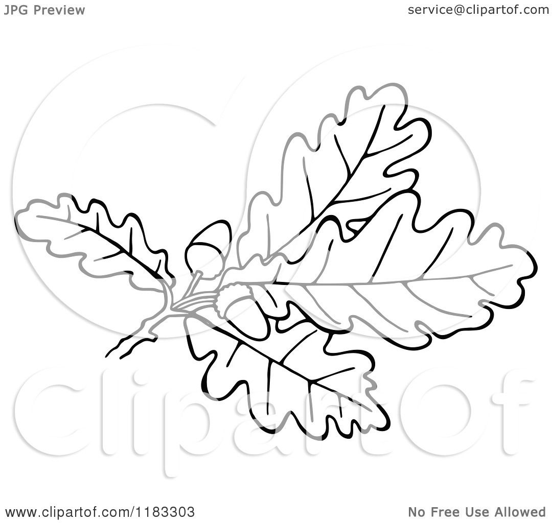 Oak Leaf Clipart