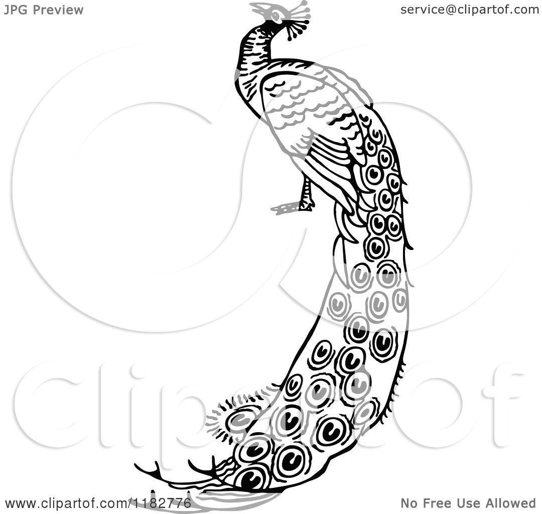 Clipart Of A Black And White Peacock