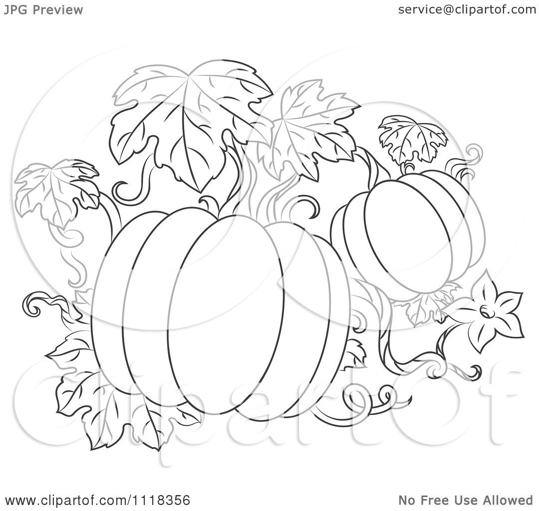 Clipart Of A Black And White Pumpkin Vine