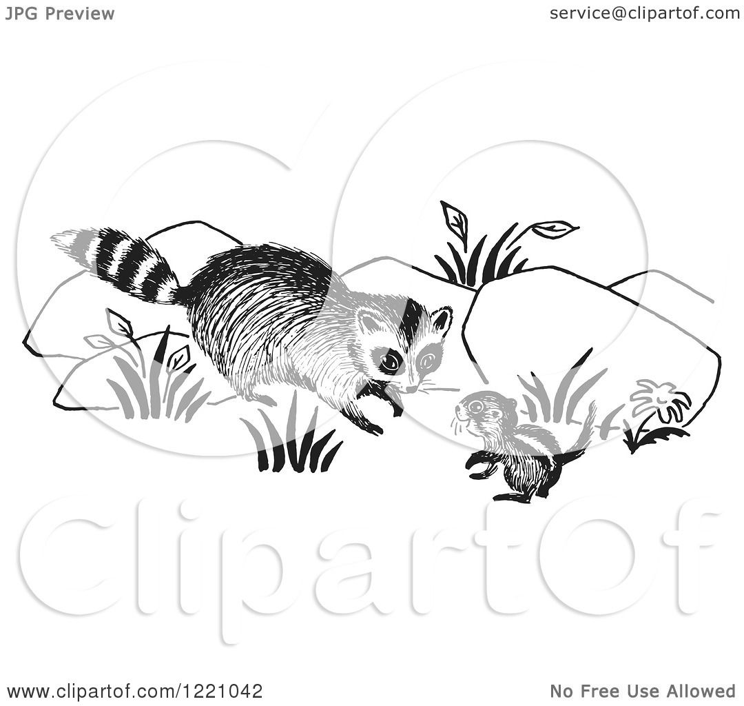 Clipart Of A Black And White Raccoon And Chipmunk