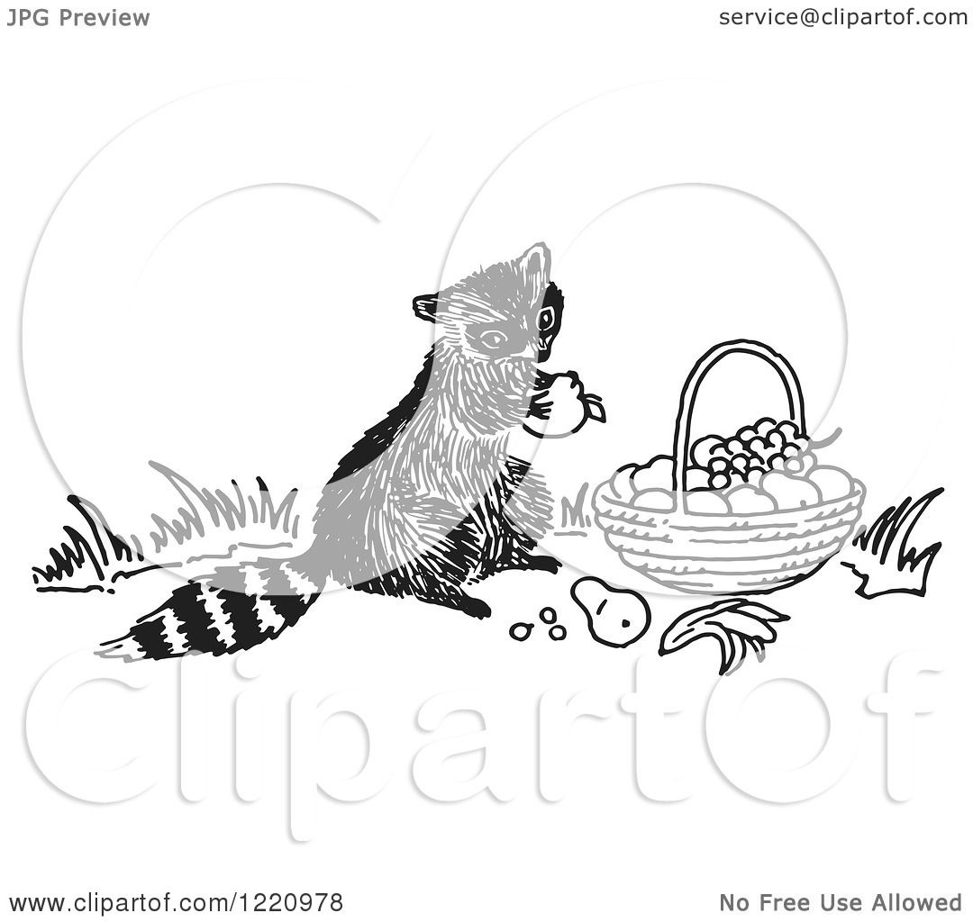 Clipart Of A Black And White Raccoon Eating Fruit From A