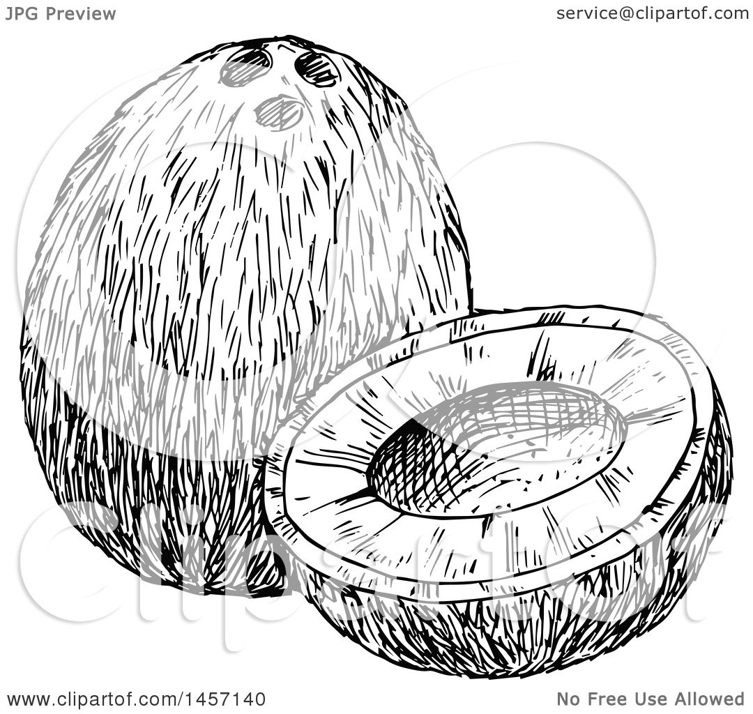 Clipart Of A Black And White Sketched Coconut