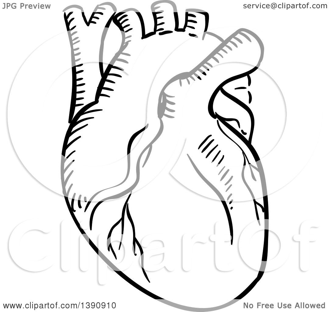 Clipart Of A Black And White Sketched Human Heart