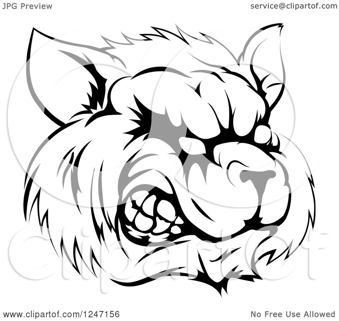 Clipart Of A Black And White Snarling Raccoon Mascot Head