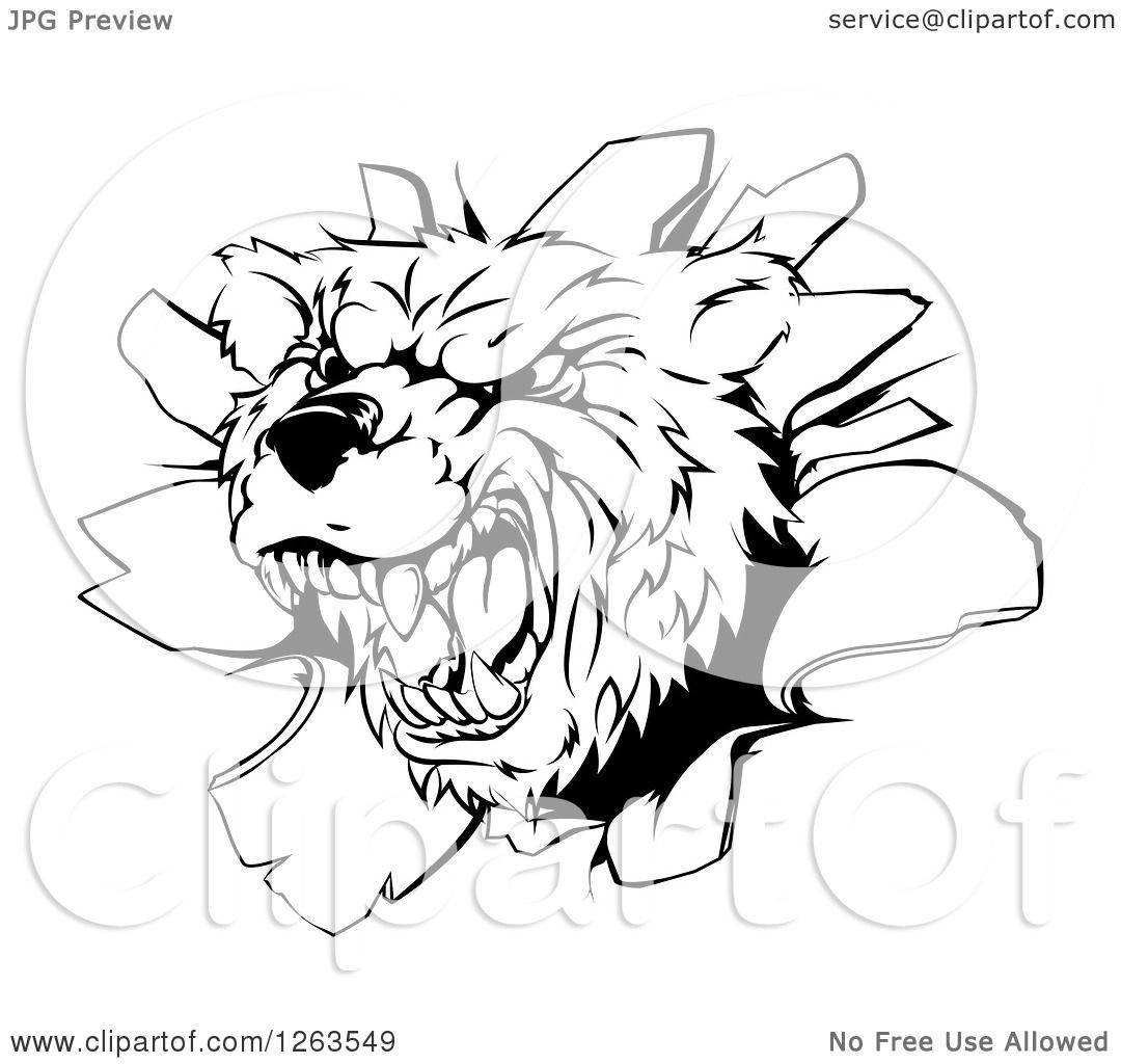 Clipart Of A Black And White Vicious Aggressive Bear