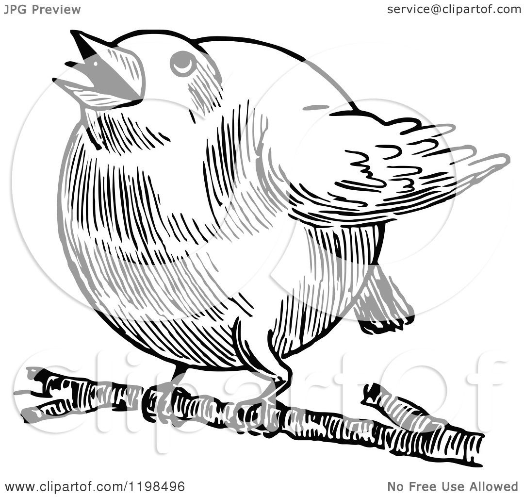 Clipart Of A Black And White Vintage Chubby Robin Bird