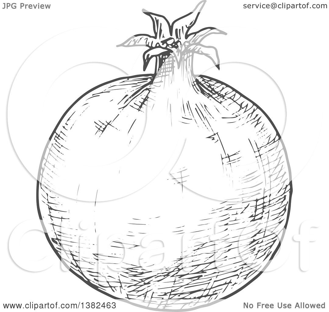 Clipart Of A Gray Sketched Pomegranate