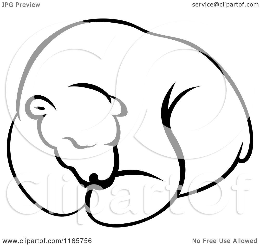 Clipart Of A Hibernating Black And White Bear
