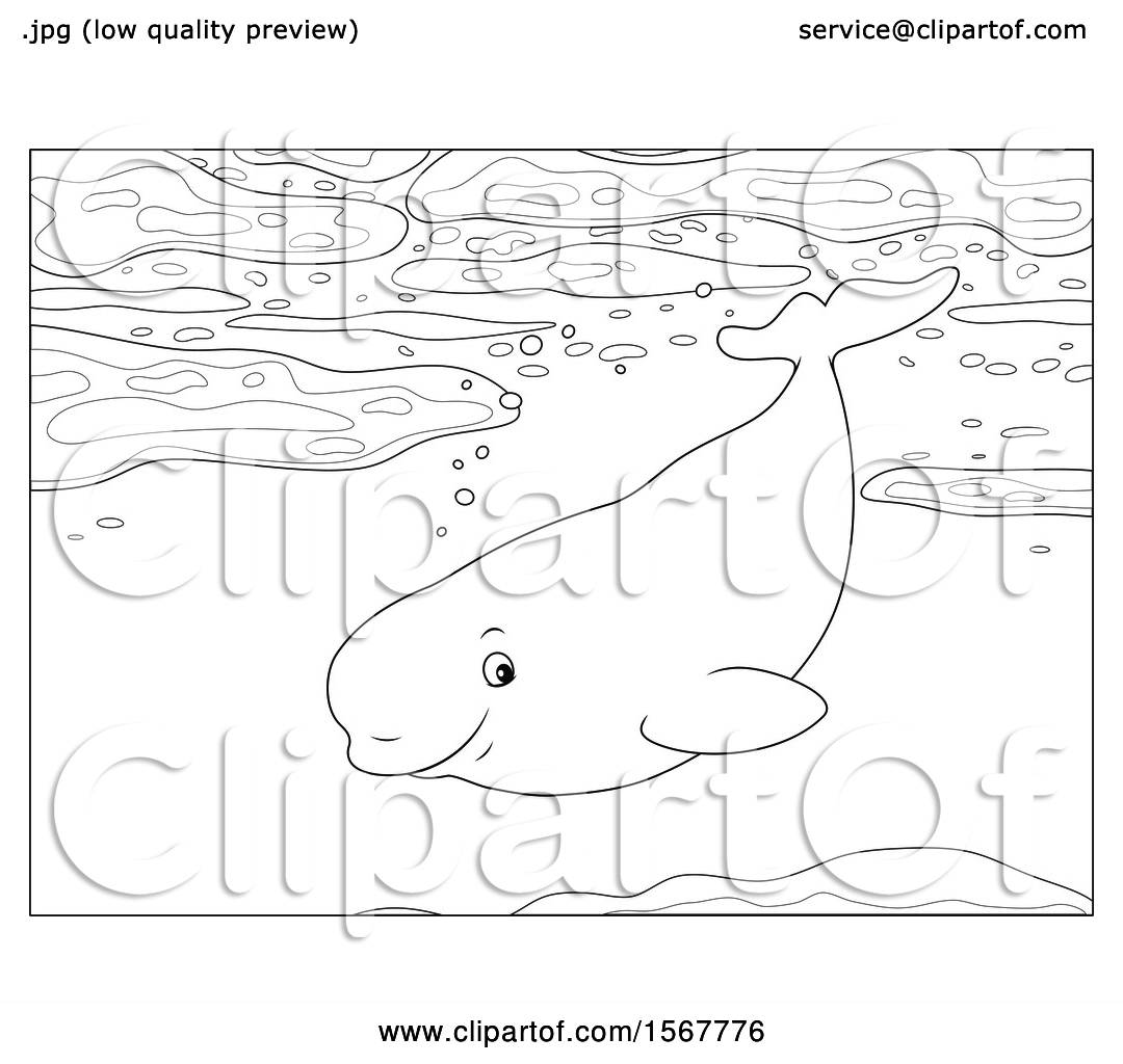 Clipart Of A Lineart Beluga Whale Swimming In The Ocean