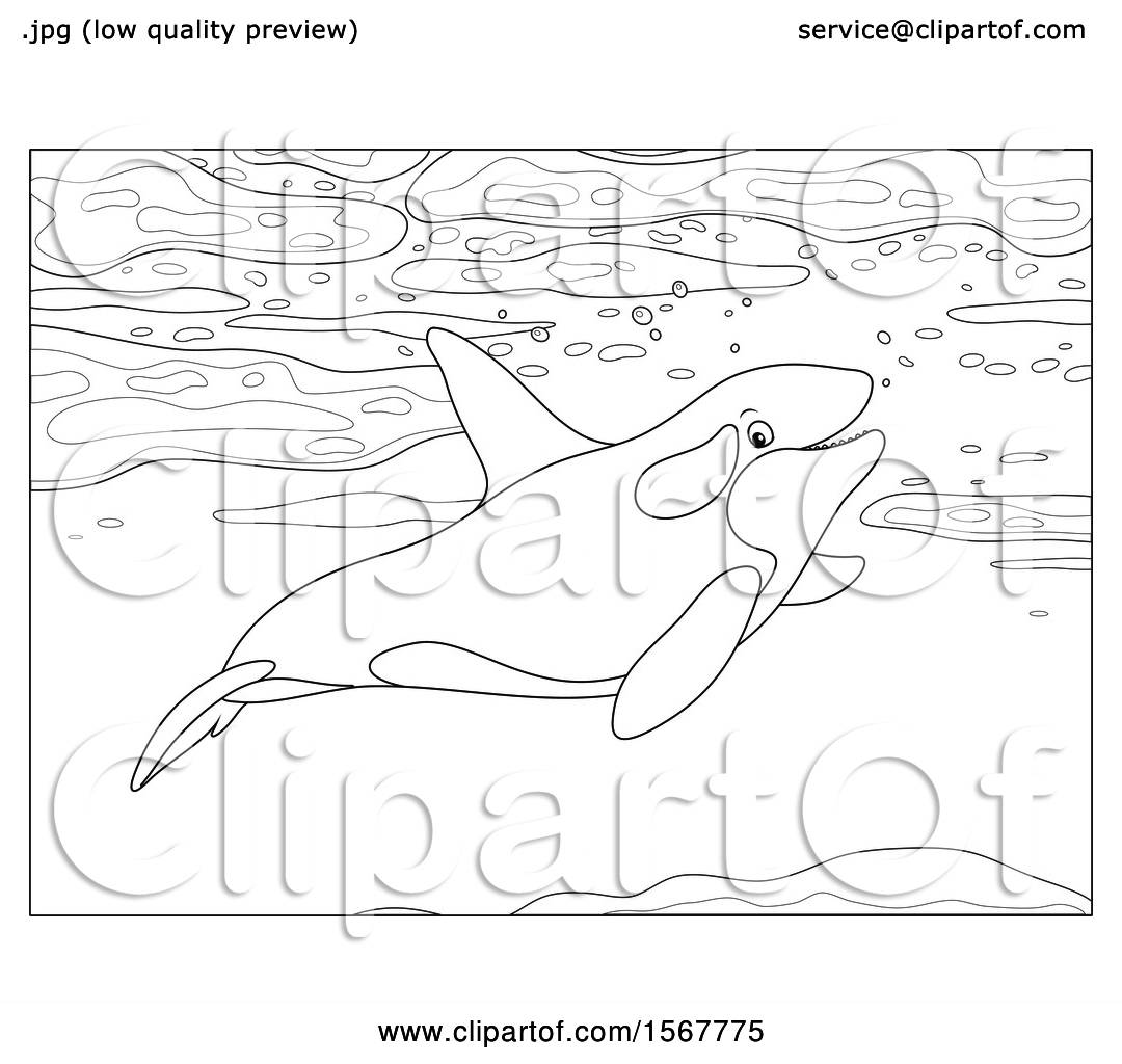Clipart Of A Lineart Killer Whale Orca Swimming In The
