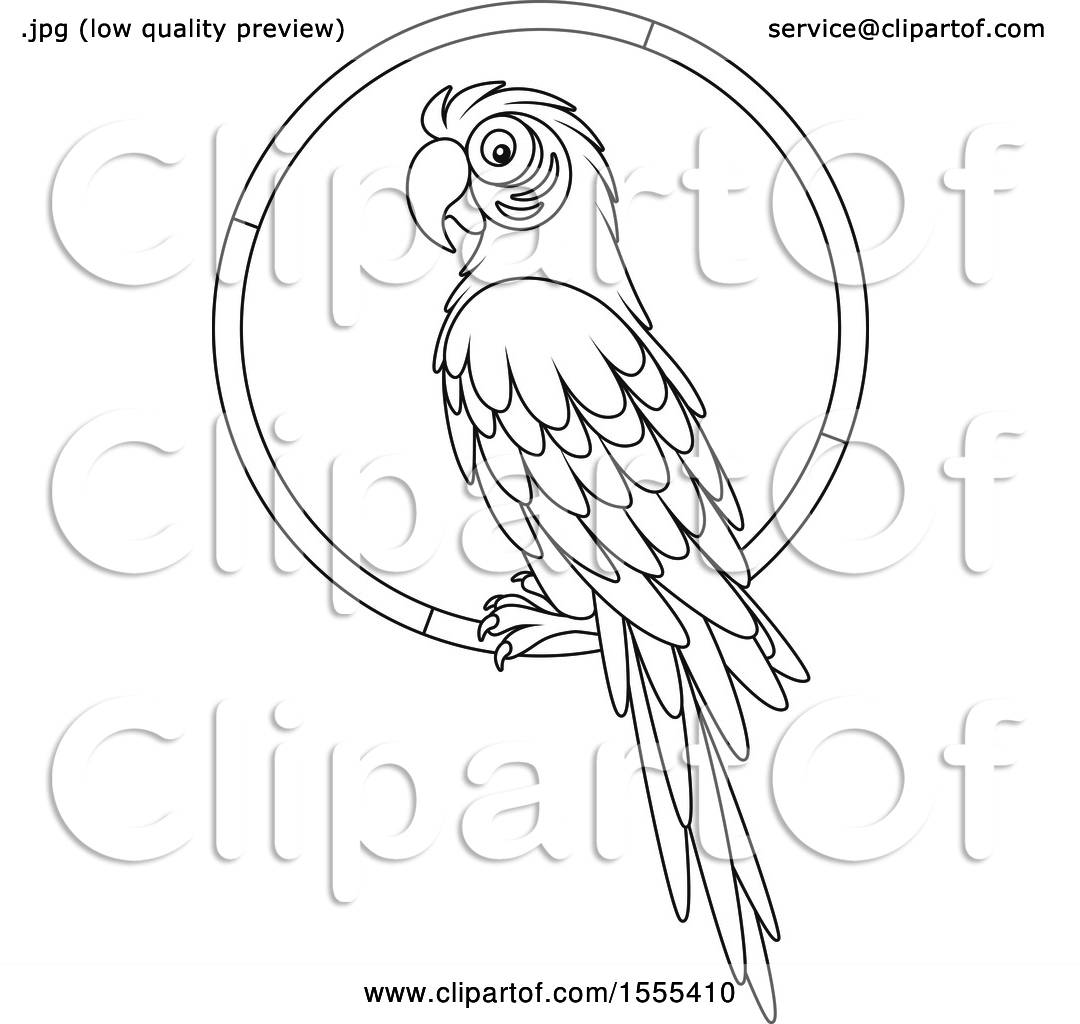 Clipart Of A Lineart Macaw Parrot On A Ring