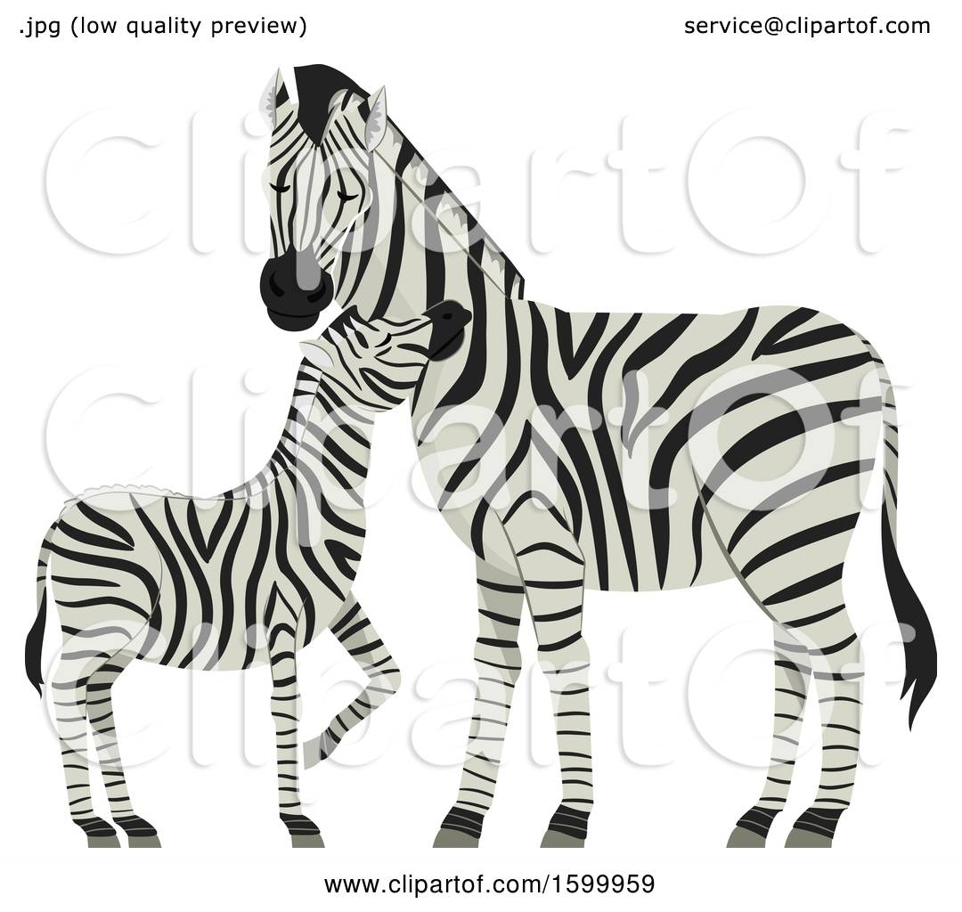 Clipart Of A Mother Mare And Foal Zebra