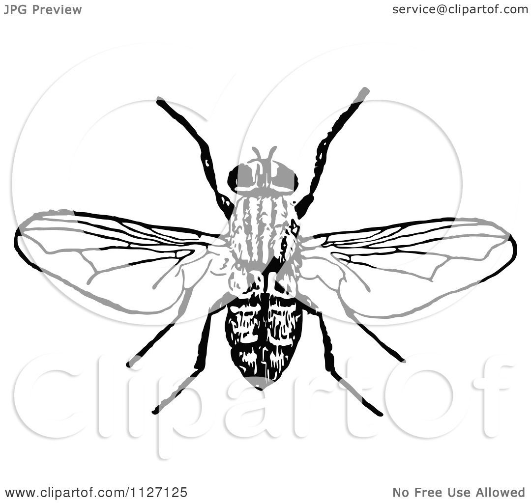 Clipart Of A Retro Vintage Black And White Bee 1