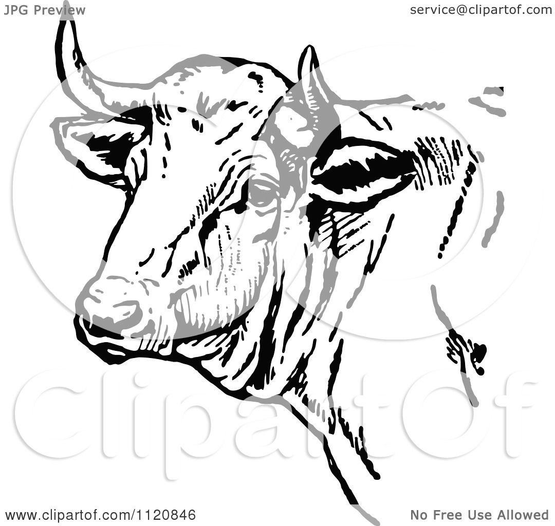 Clipart Of A Retro Vintage Black And White Cow Head