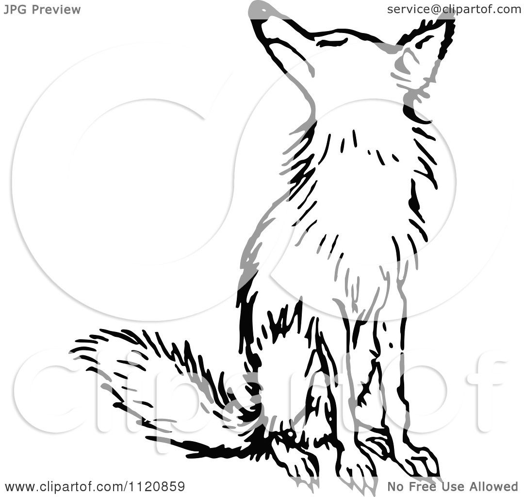 Clipart Of A Retro Vintage Black And White Fox Sitting