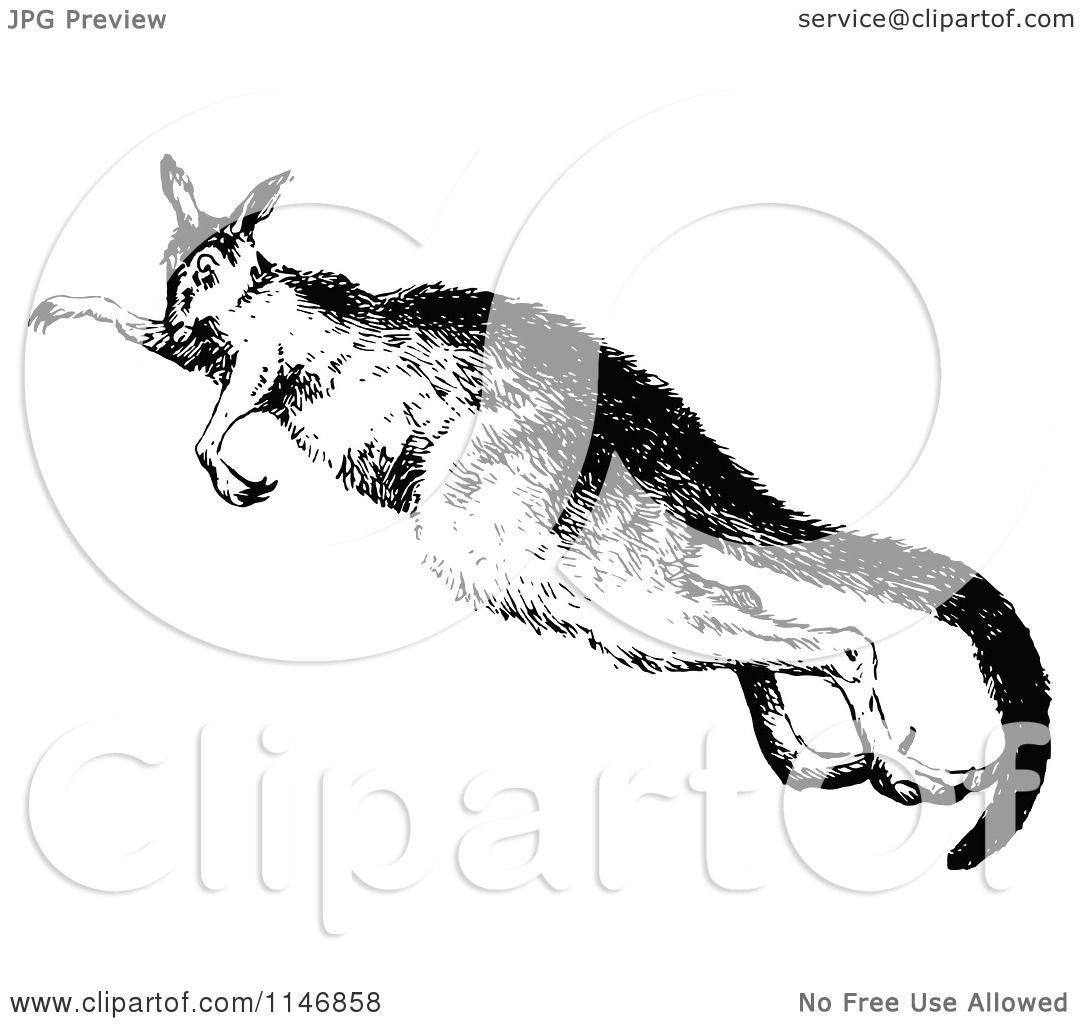 Clipart Of A Retro Vintage Black And White Kangaroo