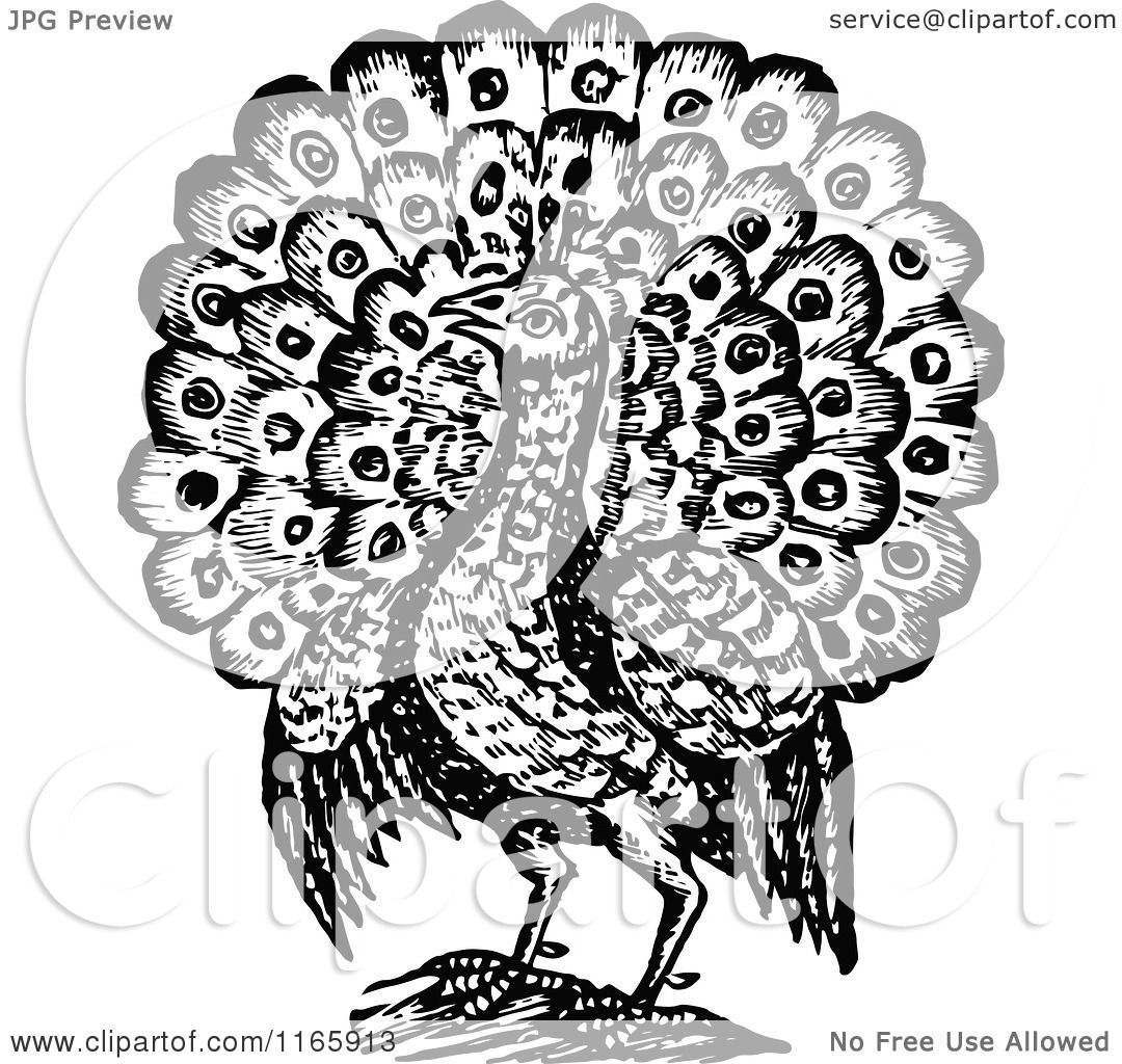 Clipart Of A Retro Vintage Black And White Peacock Bird 2