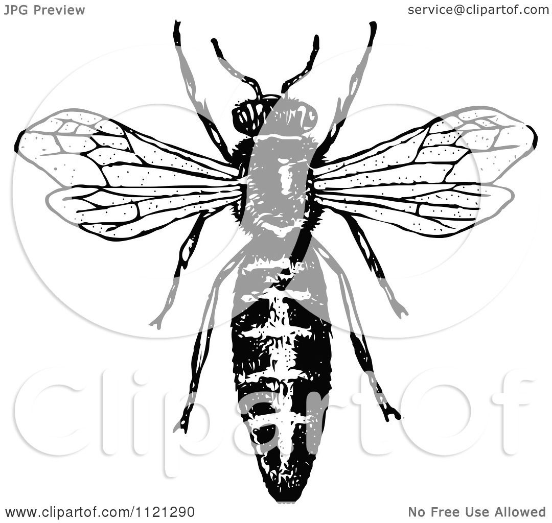 Clipart Of A Retro Vintage Black And White Queen Bee