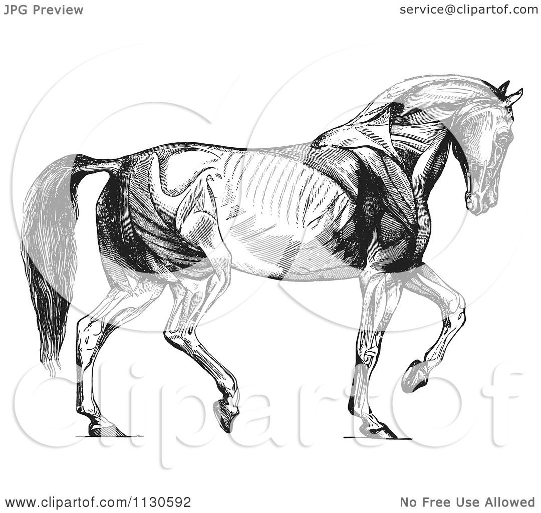 Clipart Of A Retro Vintage Diagram Of Walking Horse