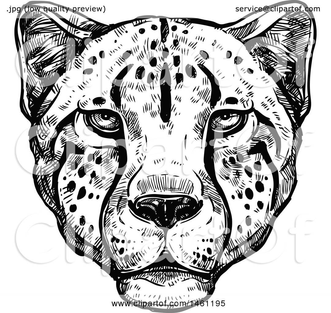 Clipart Of A Sketched Cheetah Face